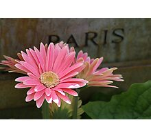 Happy Gerber Daisy Dreamer Photographic Print