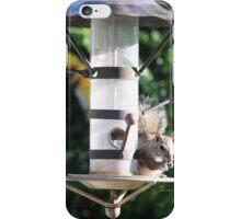 Squirrel On Backyard Bird Feeder iPhone Case/Skin