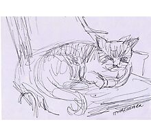 CAT ON CHAIR Photographic Print
