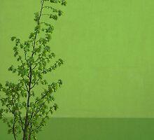 Springtime by TalBright