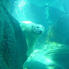 Polar Bear by BZarling