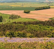 Dorset Patchwork by Pauline Tims