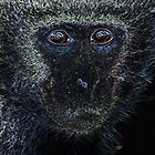 Monkey Monkey. by Gerry Pearce