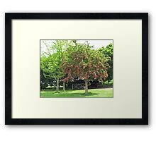 Tree with Pretty Pink Blossoms Framed Print