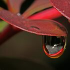 Drop of life by Rick Fin