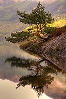 The Rowardennan Bonsai by Karl Williams