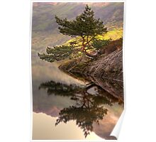 The Rowardennan Bonsai Poster
