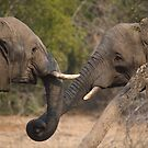 OK, let&#x27;s shake trunks on it! by Erik Schlogl