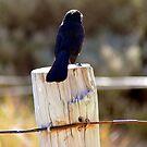 Stubborn Bird by Trish Woodford