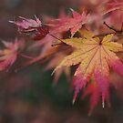 I ♥ Autumn by JaimeWalsh