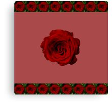 Rose in bloom Canvas Print
