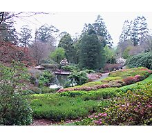 National Rhododendron Gardens Photographic Print