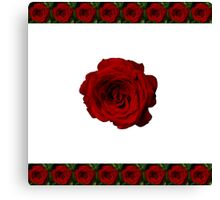 Rose in bloom on white Canvas Print