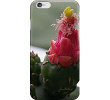 Prickle Pear Cactus Bloom  iPhone Case/Skin