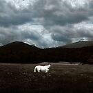 White Horse Dreamscape by Wayne King