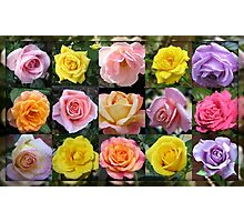Gallery of Roses Photographic Print