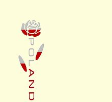 Poland Flag Rose Flower by AuntieShoe