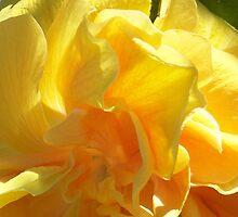 Lemon Dream by Sunflwrconcepts