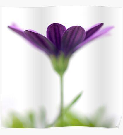 Purple evanescence Poster