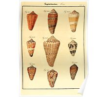 Neues systematisches Conchylien-Cabinet - 120 - Coni Poster