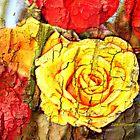 Jeff's Rose  by June Holbrook