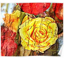 Jeff's Rose  Poster