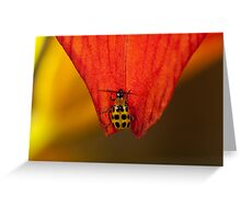 Spotted Cucumber Beetle Greeting Card
