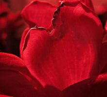 RED PETALS by Sandra  Aguirre