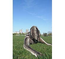 Sssssnake in the Grass 1 Photographic Print