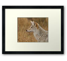 Coyote Profile Framed Print