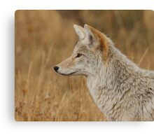 Coyote Profile Canvas Print