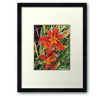 Red Daylilys Framed Print