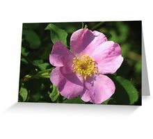 Ode to a Wild Rose Greeting Card