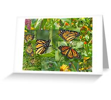 Life Cycle of the Monarch Butterfly Collage Greeting Card