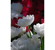 Stand Out From The Crowd!! Photographic Print