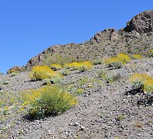 Brittle Bush on the Mountainside by Kathleen Brant