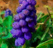 GrapeHyacinth aka Muscari by Ladydi