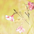Alstroemeria textured by lensbaby
