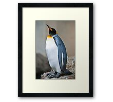 emperor penguine Framed Print