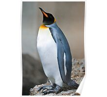 emperor penguine Poster
