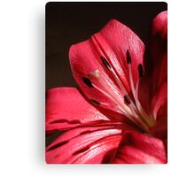 Deep Pink Lilly Canvas Print