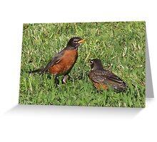 Robin & Baby Greeting Card