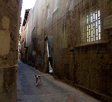 Dog Street by Philip  Rogan