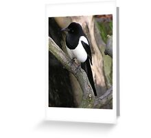 Adorbz Magpie
