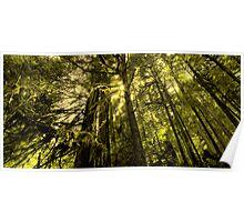 Hoh Rain Forest ~ Olympic Peninsula, WA ~ Poster