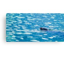 Seal into the blue Canvas Print