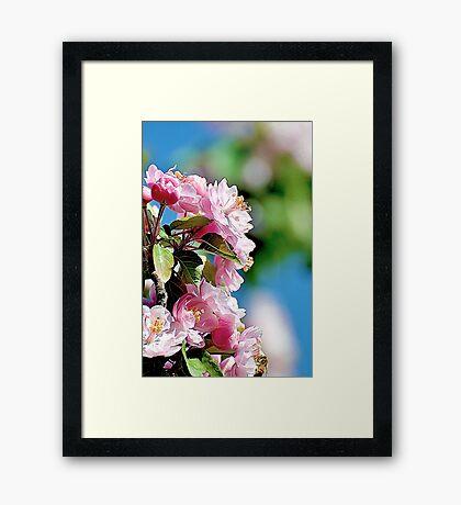 Spring into Bloom Framed Print