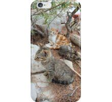 Cats of Dalmatia iPhone Case/Skin