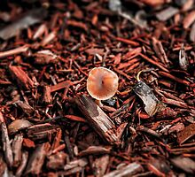 Red chips and lone shroom by Elmir Valley