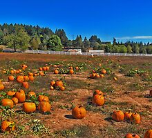 Little People, Big World Pumpkin Patch by Fred Seghetti